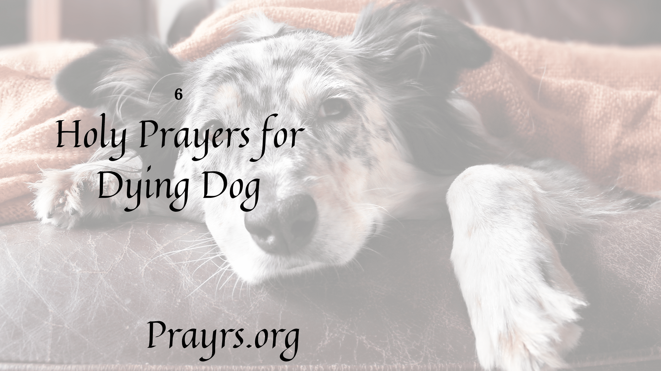Holy Prayers for Dying Dog